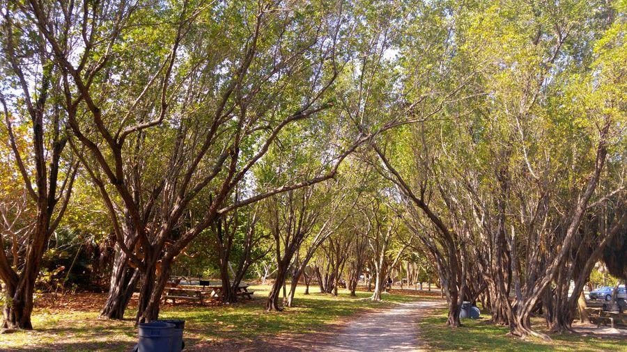 Foliage . Nature Key Biscayne National Park Florida 305 Visit Walking Around The City  Trail Path To Spring Tourism Enjoying The Sun Tb Stockphoto Morning Walk