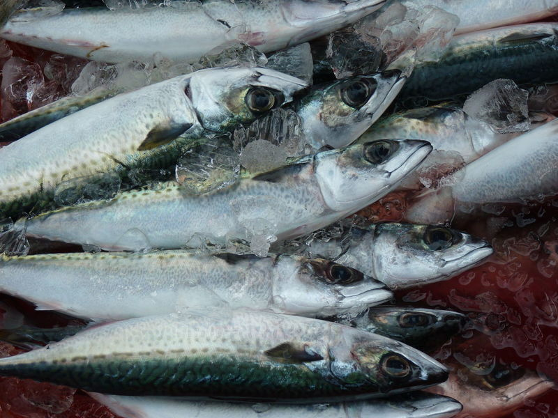 Mackerel Abundance Animal Backgrounds Close-up Fish Fish Market Food Food And Drink For Sale Freshness Full Frame Healthy Eating High Angle View Ice Mackerel Mackerel Fish Market No People Raw Food Retail  Sale Seafood Vertebrate Wellbeing