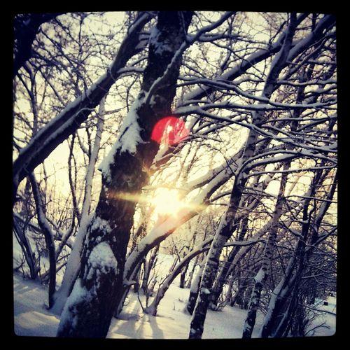 Природа зима небо Солнышко