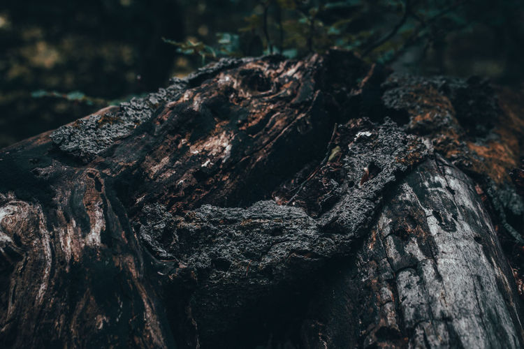 Tree Plant Close-up Wood Forest Macro_collection Outdoors EyeEm Best Shots EyeEm Nature Lover Nature_collection EyeEm Selects Wood - Material Tree Trunk Trunk Dead Plant Nature Textured