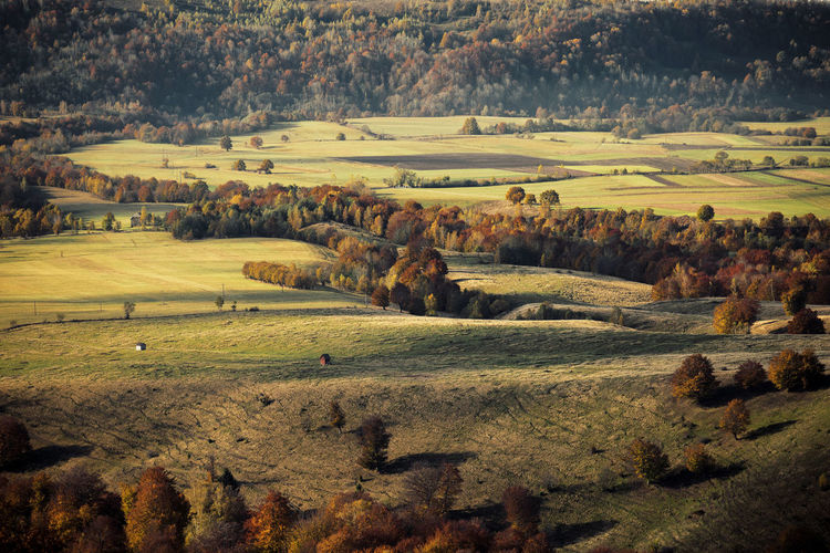 High Angle View Of Autumn Trees On Agricultural Field