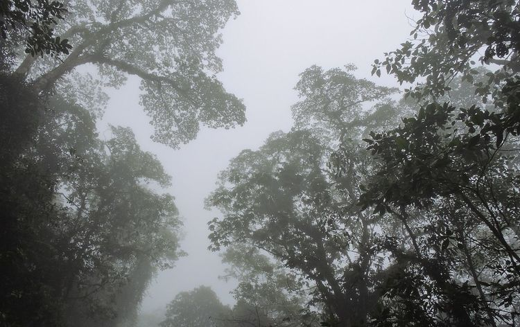 Entre la neblina. #foggy Beauty In Nature Branch Day Forest Growth Land Low Angle View Lush Foliage Nature No People Non-urban Scene Outdoors Plant Scenics - Nature Sky Tranquil Scene Tranquility Tree Tree Canopy