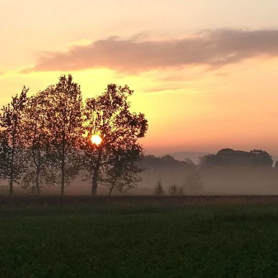 Field Fog Sunset Meadow Beauty In Nature Tree Landscape Agriculture Nature Outdoors Grass No People Day