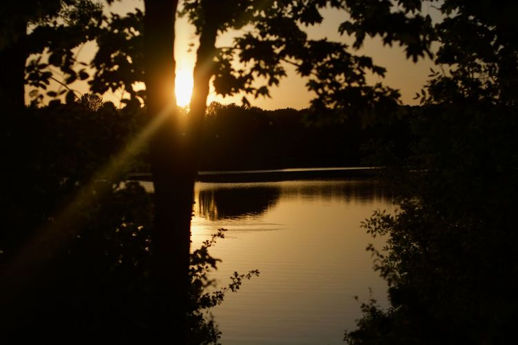 Landscape_Collection Sunset_collection Beauty In Nature Growth Lake Landscape Lens Flare Nature No People Non-urban Scene Outdoors Plant Reflection Scenics - Nature Silhouette Sky Sun Sunlight Sunset Tranquil Scene Tranquility Tree Water
