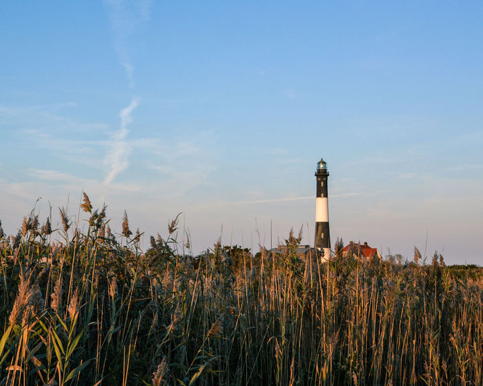 Fire Island Lighthouse Nature Growth Social Issues Business Finance And Industry No People Outdoors Agriculture Sky Grass Day Lighthouse Light House Long Island Fire Island New York Architecture Landscape