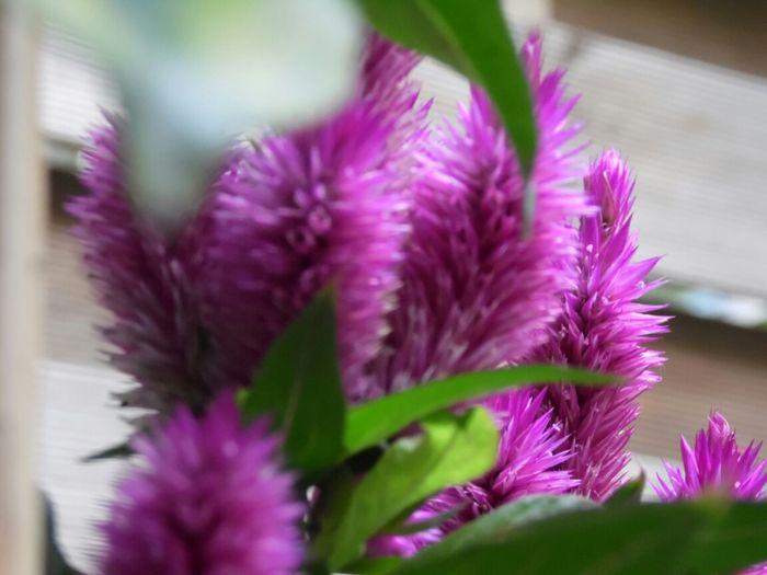 Flower Blume Sommerfeeling