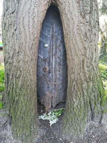 Fairy Door Architecture Bark Built Structure Close-up Day Fairy Home Forest Growth Hole Land Nature No People Outdoors Plant Rough Textured  Tranquility Tree Tree Trunk Trunk Weathered Wood - Material