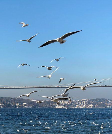 Flying Animals In The Wild Bird Animal Themes Sea Water Animal Wildlife
