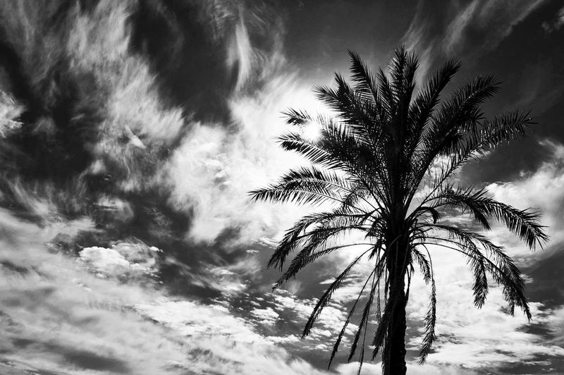 Sunny Day Nature Nature_collection Bnw Blackandwhite Bnw_collection Bnw_captures Streetview Portugal Beautiful Places Europe Nikon Nikonphotography Nikon Photography Sky Cloids Palm Tree Tree Storm Cloud Beauty Backgrounds Winter Rural Scene Environment Dramatic Sky Weather Lightning Power In Nature
