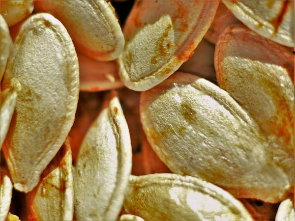 Close Up Close-up Day Food Food And Drink Freshness Full Frame Healthy Eating Holloween Indoors  Macro Macro Photography Maximum Closeness Moorpark No People Photography Picture Pumpkin Pumpkin Seeds Season  Seasonal Seeds Texture Textured  Yummy