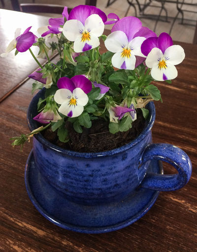 Violet Flower Flowering Plant Freshness Beauty In Nature Fragility Inflorescence No People Flower Head Indoors  Purple Flower Pot Plant Part Pink Color Potted Plant Plant Petal Nature Close-up Violet