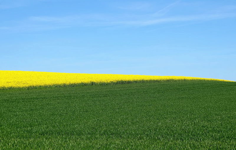 Feld Himmel Agriculture Beauty In Nature Clear Sky Crop  Day Field Freshness Gelb Grass Green Color Growth Grün Horizon Over Land Landscape Nature No People Outdoors Rural Scene Scenics Sky Tranquil Scene Tranquility Winkel Yellow