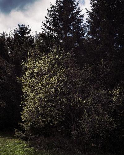 Stock Tree