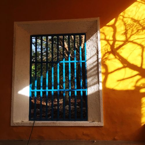 Tree Branches Yellow Blue Silhouette Light Shadows Window Indoors  No People Day Curtain Architecture Built Structure Close-up