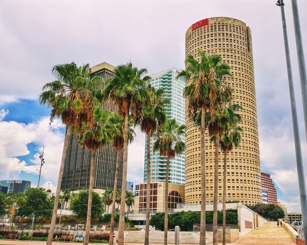 Downtown Tampa Architecture Building Exterior Built Structure Tree Tall - High Skyscraper Palm Tree Low Angle View City Growth Tower Day Outdoors No People Travel Destinations Modern Sky Tall Luxury Hotel Cityscape Canon5Dmk3 Canonphotography Tampa Tampa Fl Architecture