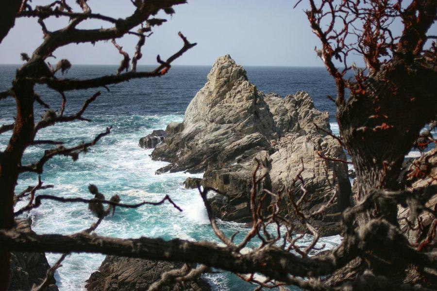 California Point Lobos Seaside Trees Waves Crashing