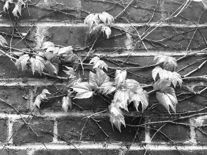 Brick Wall,