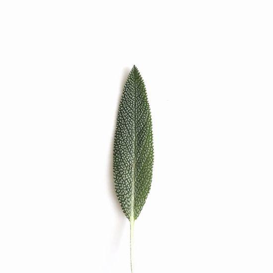 Just leaf me alone . Creative Caption Art Foodart Sage Minimalism