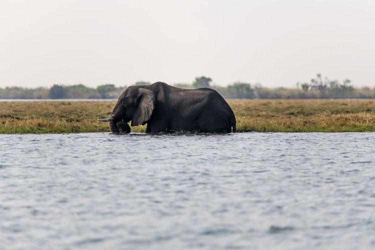 Side view of elephant in a field