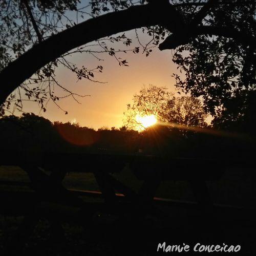 End of a beautiful day Sunset Sun Silhouette Sky Sunlight Tree Nature No People Tranquility Tranquil Scene Scenics Beauty In Nature Dramatic Sky Sky And Clouds Relaxing ♥ Fallbeauty Skycollection Picnictable Sky