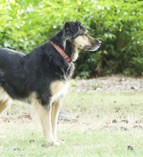 The Dog waiting