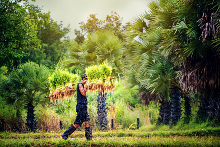 Side view of man carrying crops against trees in farm