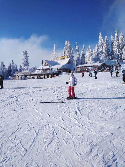 Mountain scenery Alpine Skiing Cold Temperature Winter Snow Nature Sky Land Tree