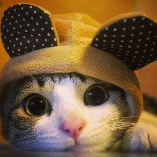 Gatito Miau Orejitasderaton Instaphoto instacat