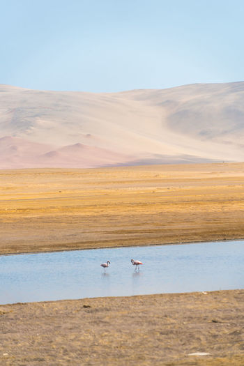 High angle view of flamingos in river against landscape