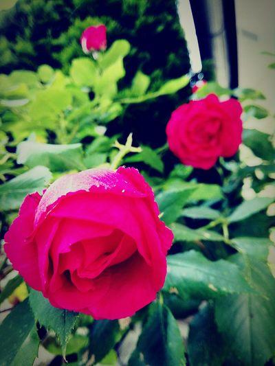 Rosè in the Garden First Eyeem Photo