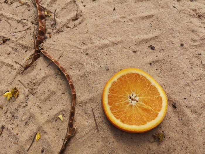 High angle view of orange fruit on land