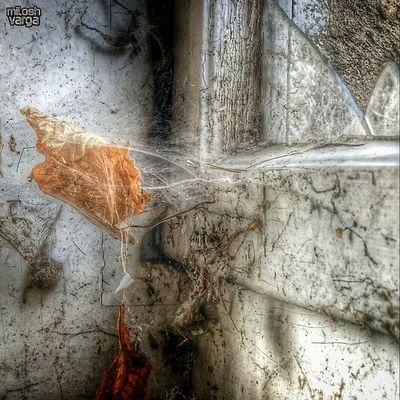 Grimewindow Rsa_windows Creepywindowsunday Forgottenwindows brokenwindows windowsonly windowfetish windowsbegone windowporn whatsonyourwindowsill window_filth RoyalSnappingArtists rsa_preciousjunk
