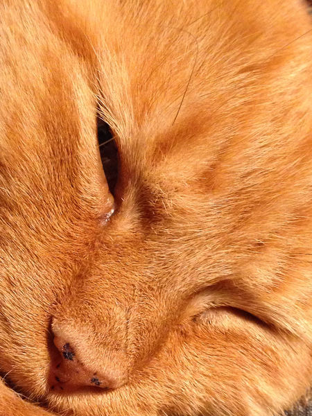 Animal Body Part Animal Eye Animal Hair Animal Head  Backgrounds Brown Cat Close-up Detail Extreme Close Up Extreme Close-up Focus On Foreground Full Frame Ginger Cat Ginger Tabby Kitty Mammal Nature No People Part Of Portrait Whisker Color Palette
