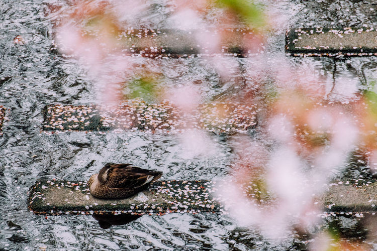 High angle view of bird preening on stone in lake