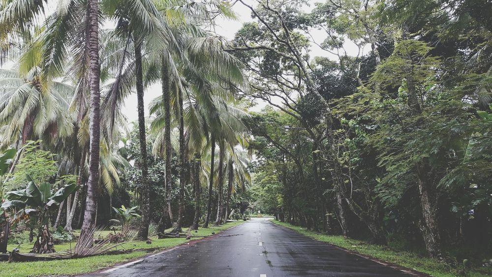 Brunei Darussalam Brunei Life Nature Green