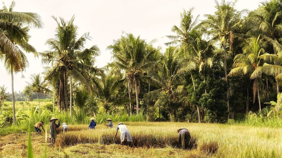 People working on agricultural field against sky