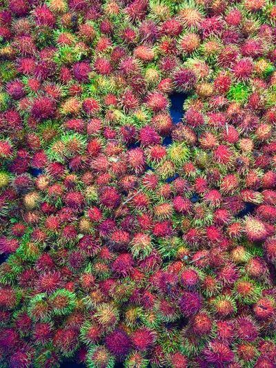 Full frame shot of pink flowering plants on field