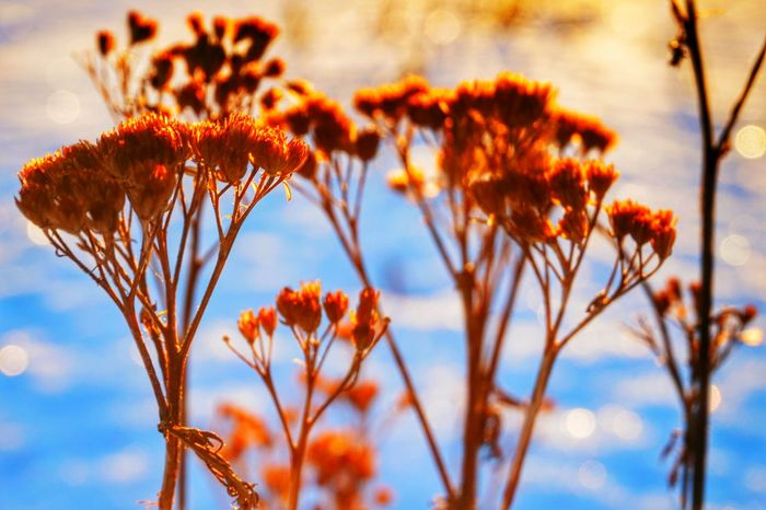 Flower Collection Morning Glow Winter_collection Wintertime ⛄ Beautiful Cold Day Hanging Out Taking Photos