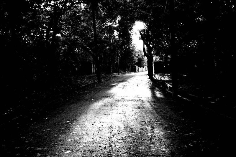 Footpath amidst trees in city