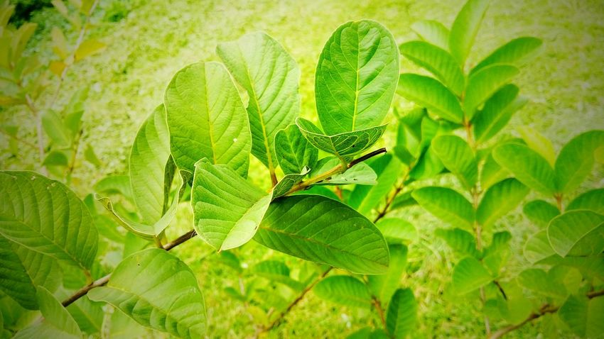 Green.. I love green. Mobilephotography StillLifePhotography Taking Photos Check This Out Taking Photos Relaxing