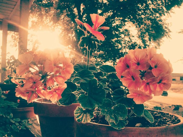 Picture of the day, new here to! Flowers Outdoors Greatday