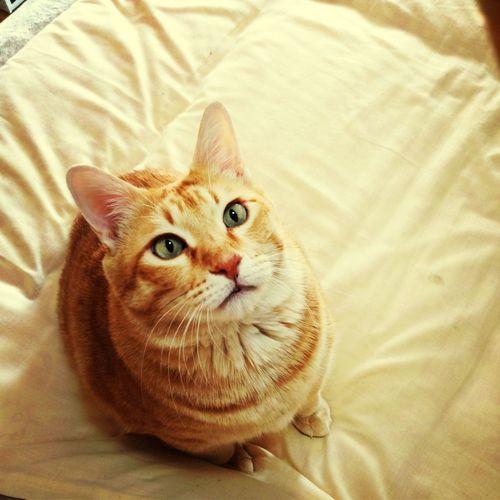 Boku Staring.. Cat what?))