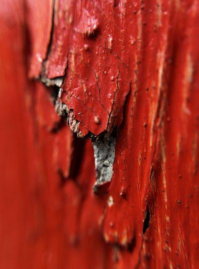 Supernormal Bamboo Shoot Red Paint Nexus5