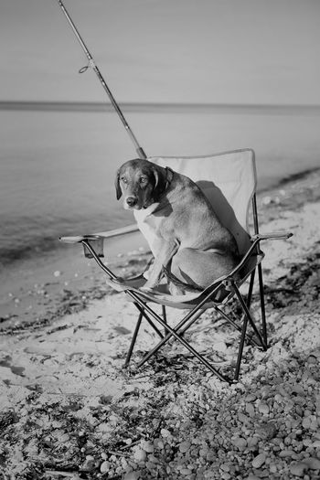 Day Dog Domestic Animals Fishing Mammal One Person Outdoors People