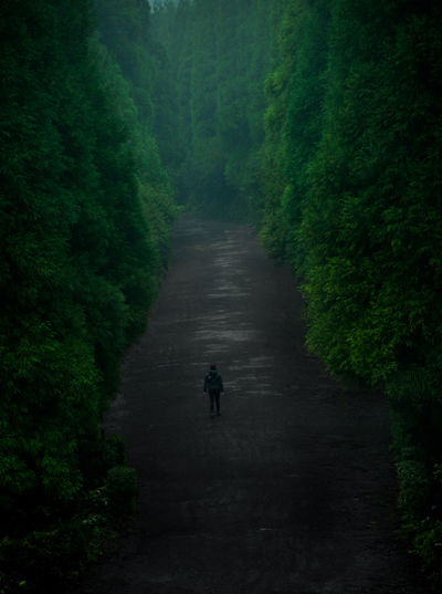 Mysterious Place Mystery Island Portugal Beauty In Nature Day Forest Forest Photography Full Length Growth Landscape Lifestyles Men Mystery Nature One Person Outdoors People Real People Rear View Road Saomiguel The Way Forward Transportation Tree Walking
