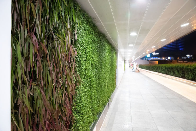 vegetal wall - Bangkok - nature urban - plant in city Plant Direction The Way Forward Grass Green Color Diminishing Perspective Footpath Growth Illuminated No People Architecture Nature Transportation Lighting Equipment Outdoors Day Land Built Structure In A Row Long Hedge Bangkok City Vegetal Wall