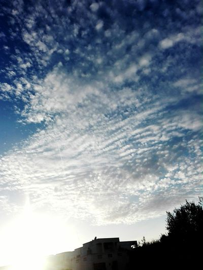 Tree Astronomy Silhouette Blue Sky Cloud - Sky