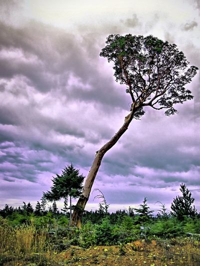 EyeEm Best Shots Tree Sky Cloud - Sky Growth Nature Outdoors Day Beauty In Nature No People Tranquility Landscape Branch Scenics EyeEmNewHere Visual Creativity The Traveler - 2018 EyeEm Awards The Great Outdoors - 2018 EyeEm Awards The Creative - 2018 EyeEm Awards