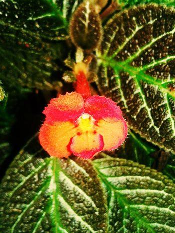 Plant Fragility Flower Head