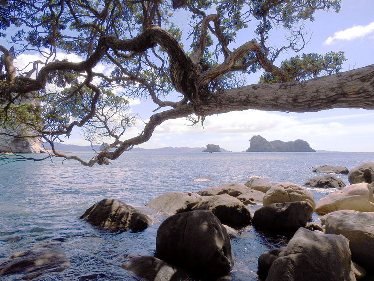 Beach Beauty In Nature Calmness Day Horizon Over Water Nature No People Outdoors Scenics Sea Sky Tranquil Scene Tranquility Tree Water